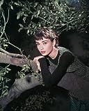 Audrey Hepburn 16x20 Poster as Sabrina Fairchild in Sabrina posing on tree