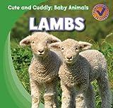 Lambs, Katie Kawa, 1433955466
