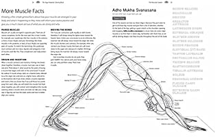 The Yoga Anatomy Coloring Book A Visual Guide To Form Function And Movement Solloway Kelly Amazon Sg Books