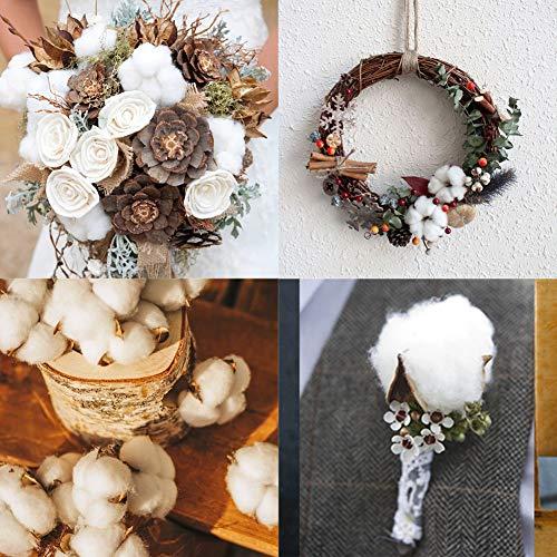 HAKACC Baumwolle Deko, 10 Stück Natürlich Getrocknete Baumwolle Trockenblumen Deko DIY Dekoration Home Party