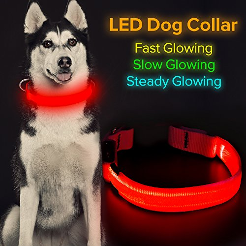 HiGuard LED Dog Collar, USB Rechargeable Glowing Pet Collar Night Safety LED Light Up with Nylon Webbing Perfect for Small, Medium, Large Dogs (Medium, Red)