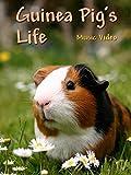 Guinea Pig's Life