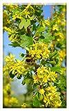 Single-Gang Blank Wall Plate Cover - Ribes Aureum Flowers Yellow Bush Branch Shrub