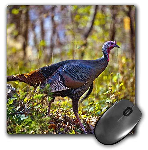 3dRose Danita Delimont - Turkeys - USA, Minnesota, Mendota Heights, Wild Turkey - Mousepad (mp_314869_1)