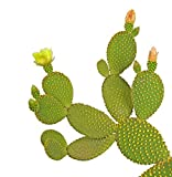 Wallmonkeys Opuntia Cactus Peel and Stick Wall Decals WM129942 (18 in H x 18 in W)