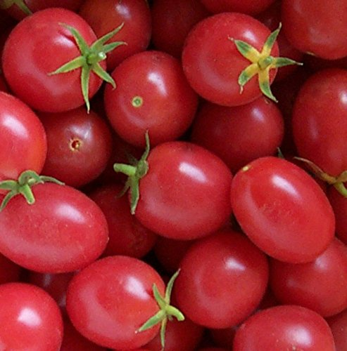 71 1 Brandywine Light - Delicious Porter Tomato (Non-Gmo) Tomato 150 Seeds By Jays Seeds Upc 643451296105