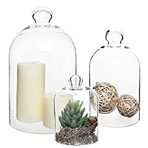 Set of 3 Decorative Clear Glass is cute plant gifts