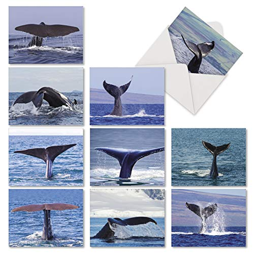 Note Whale - Whale Tales - 10 Majestic All Occasion Blank Cards with Envelope (4 x 5.12 Inch) - Ocean Orca Tails Notecard Set - Boxed Stationery Note Greeting Cards AM6839OCB-B1x10