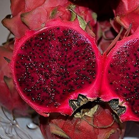 EgBert 50 Pc/Pack Semillas Pitaya Semilla De Árbol De Fruta De ...