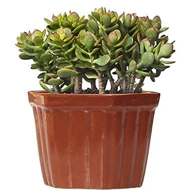 Prime Special Offer - SouvNear Planter Pots Outdoor / Indoor - Handmade Ceramic Flower Pot Vessel Planter – Elegant Home Decor