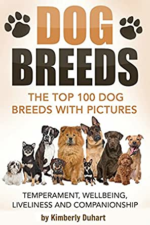 Dog breeds the top 100 dog breeds with pictures for Best dogs for companionship