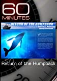 Return of the Humpback