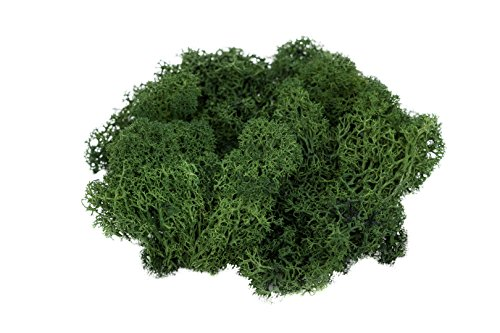(Reindeer Moss Preserved | Spring Green Moss | for Fairy Gardens, Terrariums, or Any Craft or Floral Project | (4 Ounces) | Plus Free Nautical Ebook by Joseph Rains)