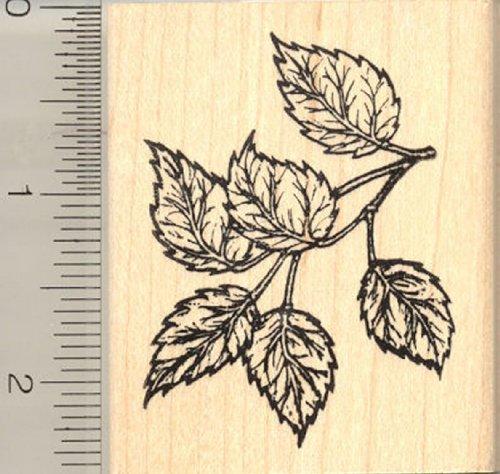 Tree Leaf Rubber Stamp, Simple, Serrate, Birch