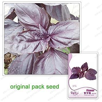35 Graines Pack Plantes Aromatiques Noir Basilic Violet Graines De
