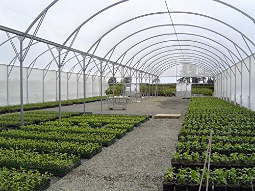 Ecover 5.5Mil Greenhouse Plastic Cover Polyethylene Clear Film for Garden Plant Cover, 12 x 50ft by Ecover (Image #4)