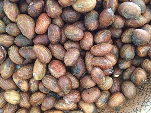 - African Bitter Kola Nuts 0.5lbs