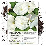 Seed Needs, Pearly Gates Morning Glory (Ipomoea tricolor) 75 Seeds