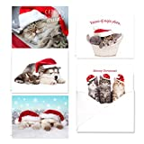 Christmas Cats Holiday Card Assortment Pack - Set of 25 cards - 5 of each design, versed inside with envelopes