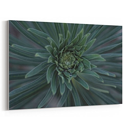 Westlake Art - Flower Desert - 12x18 Canvas Print Wall Art - Canvas Stretched Gallery Wrap Modern Picture Photography Artwork - Ready to Hang 12x18 Inch (8776-9880A)