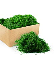 Royal Imports Fresh Dried Forest Green Moss, Naturally Preserved, 3 LB Bulk Case