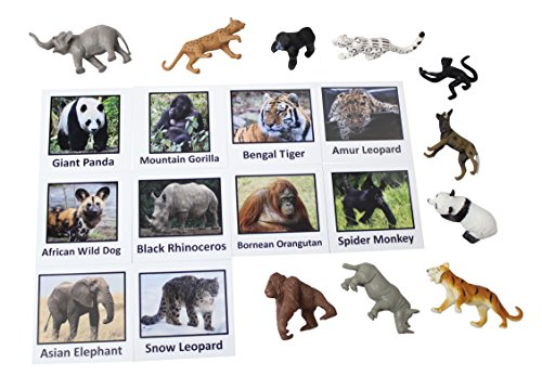 Curious Minds Busy Bags Montessori Endangered Species Animal Match Cards and Figurines. Nomenclature Science Work Continent Box