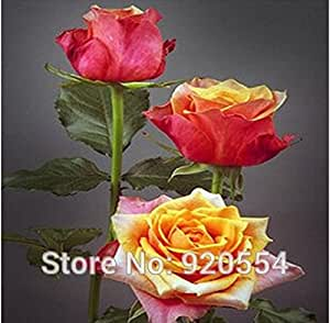 rose seed, 100pcs/bag rose seeds beautiful flower for four seasons sowing DIY home garden