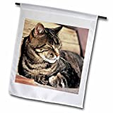 3dRose fl_94870_2″ Utah, Capitol Reef Np. Sleeping Tabby Cat – RIC Ergenbright Garden Flag, 18 x 27 Review
