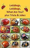 Ladybugs, Ladybugs,  What Are You plus Trivia and Jokes
