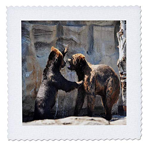 3dRose Dreamscapes by Leslie - Animals - Brown Bears Swat - 20x20 inch quilt square (qs_314230_8)
