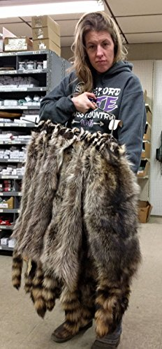 """1 - Tanned Northeast Iowa RACCOON (34"""" tip to tip) for sale  Delivered anywhere in USA"""