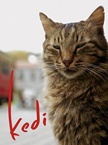 Kedi by