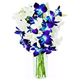 Mother's Day Collection: Starry Night Orchid Bouquet of 5 Blue Dendrobium Orchids & 5 White Dendrobium Orchids with Vase - by KaBloom