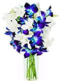 Crisp white dendrobium orchids mixed with blue velvet orchids remind us of those special starry winter nights worth celebrating!