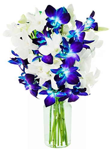 KaBloom Valentine's Day Special: Starry Night in the Tropics Bouquet of 5 Blue Dendrobium Orchids & 5 White Dendrobium Orchids from Thailand with Vase