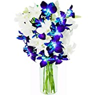 KaBloom Starry Night in the Tropics: Bouquet of 5 Blue Dendrobium Orchids & 5 White Dendrobium Orchids from Thailand with Vase