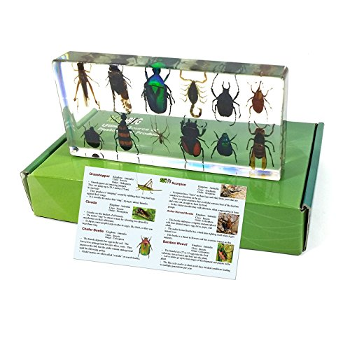 - REALBUG 12 Bugs Collection Desk Decoration