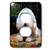3dRose Danita Delimont - Dogs - Bichon Frise on colorful tile table top, MR - Light Switch Covers - 2 plug outlet cover (lsp_258204_6)