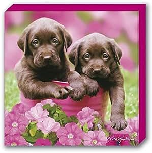 Perros chocolate dog cuadro lienzo montado sobre - Lienzo sobre bastidor ...