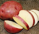 buy SEED POTATOES - 1 lb. Red Norland * Organic Grown * Non GMO * Virus & Chemical Free * Ready for Spring Planting * now, new 2020-2019 bestseller, review and Photo, best price $11.29