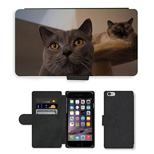 "Just Phone Cases PU Leather Flip Custodia Protettiva Case Cover per // M00129182 Cat Hangover Gris Chat // Apple iPhone 6 PLUS 5.5"""