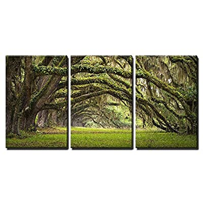 Plantation Oak Trees Forest Landscape - Canvas Art Wall Art - 16