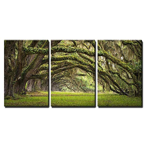 wall26 - 3 Piece Canvas Wall Art - Oaks Avenue Charleston SC Plantation Live Oak Trees Forest Landscape - Modern Home Decor Stretched and Framed Ready to Hang - 24