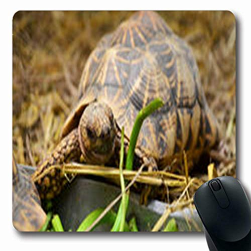 (Pandarllin Mousepads by Tortoise Focus Dried Straw Sulcata Grass Wildlife Active Nature Reptile Oblong Shape 7.9 x 9.5 Inches Oblong Gaming Mouse Pad Non-Slip Rubber Mat)