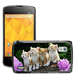Hot Style Cell Phone PC Hard Case Cover // M00047163 pets cats cat kitten animals kittens // LG NEXUS 4