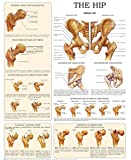 The hip - e-chart: Quick reference guide