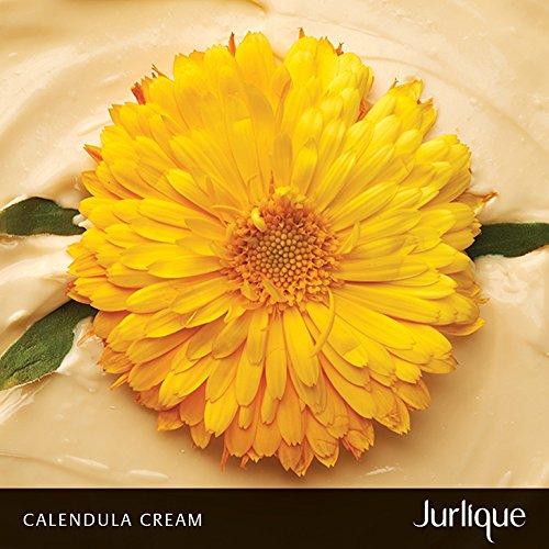 Skin Moisturizer - Jurlique: Calendula Cream - 1.4 oz - Calms Aggravated Skin - Deeply Hydrates Sensitive Skin - Protects Against Environmental Aggressors