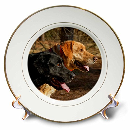 3dRose Susan Kjellsen Photography - Dogs - One black and one yellow Labrador retriever - 8 inch Porcelain Plate (cp_280230_1)