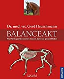Balanceakt: Wie Pferde geritten werden müssen, damit sie gesund bleiben