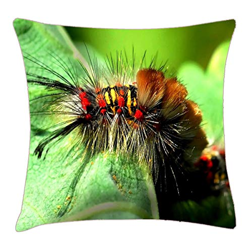 (HFYZT Anacapa Island Tussock Moth Caterpillar Throw Pillow Cover 18x18 Inch Two Sides Design Printed Pillowcase)